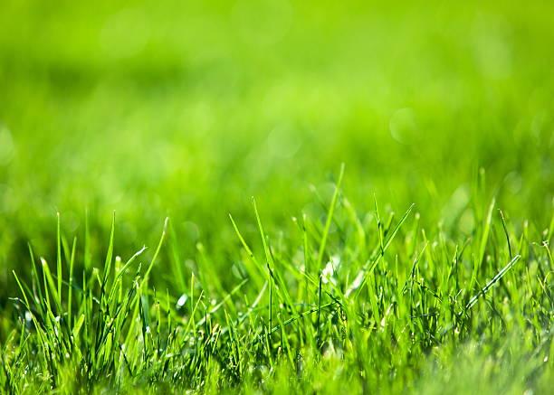 Hierba verde exuberante. - foto de stock