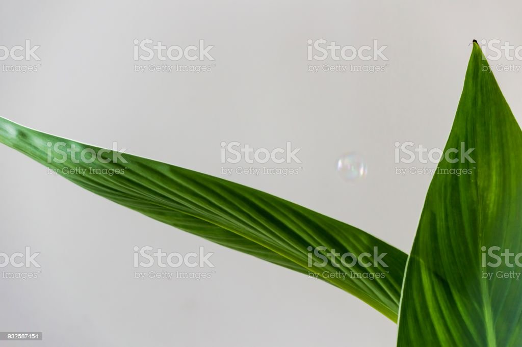 Green lush foliage against white background with floating bubble stock photo