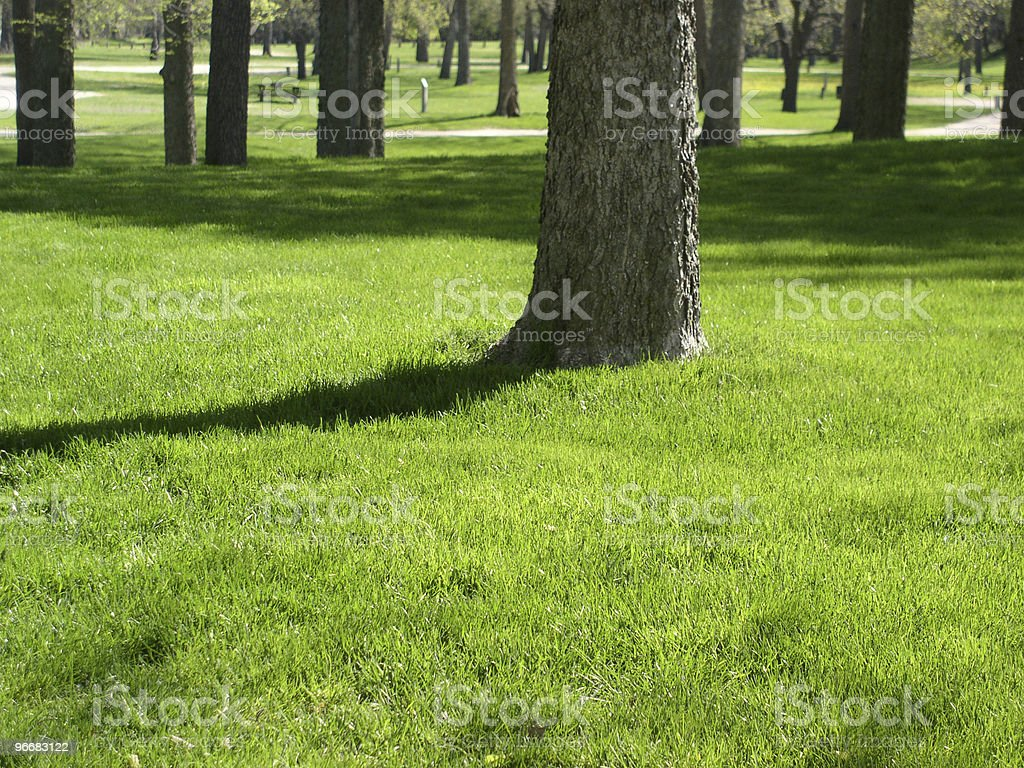 Green lush grass in beautiful park royalty-free stock photo