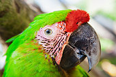 Lovebird in cage, wild animals and birds, parrots