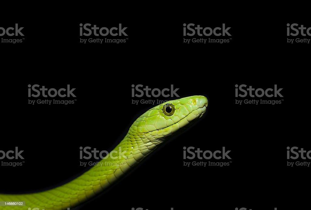 Green mamba royalty-free stock photo