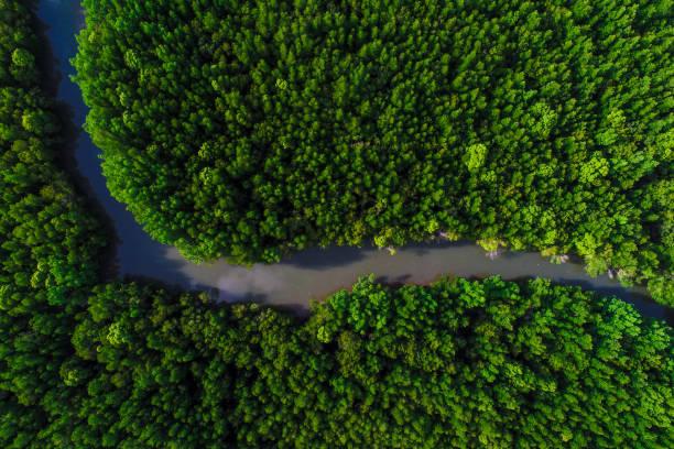 green mangrove ecology rainforest jungle of nature landscape - wood texture zdjęcia i obrazy z banku zdjęć