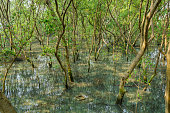 Mangrove forest in Southeast Asia