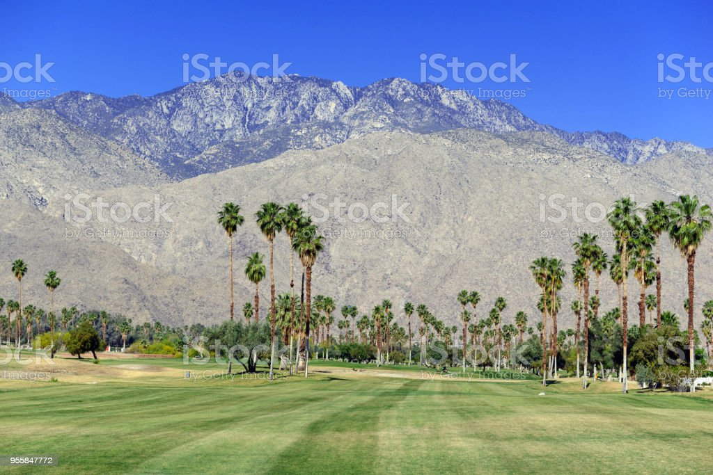 Green manicured grass of golf course and palm trees with blue skies with mountain background stock photo