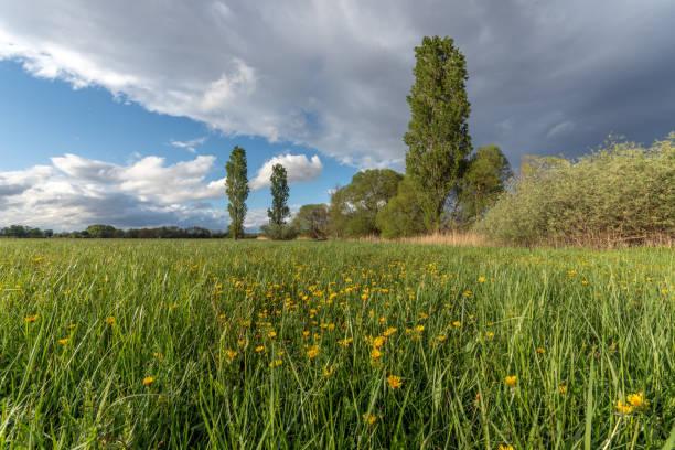 prairie verdoyante après l'orage - orage en alsace photos et images de collection