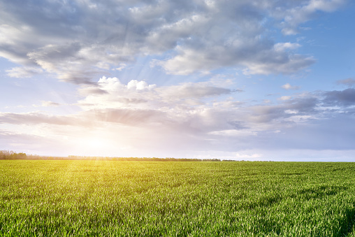 Green meadow and blue sky with clouds and sun with rays.