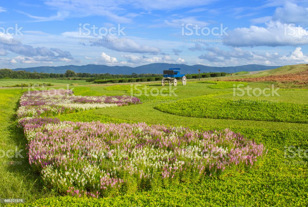 綠草地和宇宙花與辛哈公園花園,泰國的雲天空 免版稅 stock photo