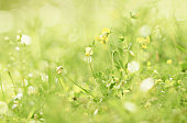 Dainty fairy flowers nature background. Tiny green floral world with sparkling dew bokeh. Soft focus.