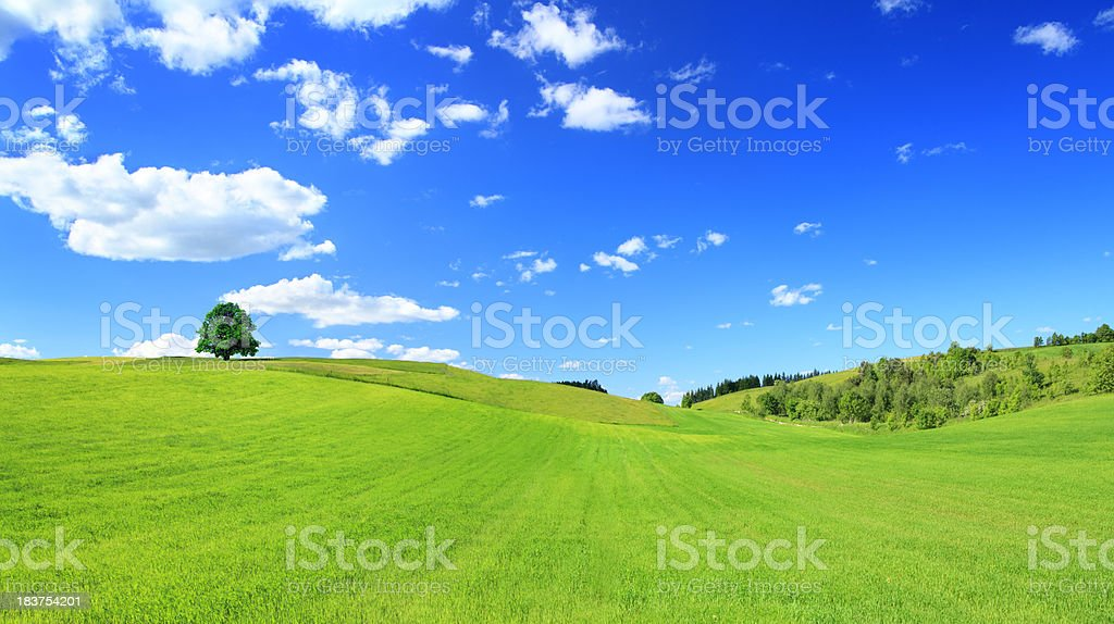 Green Meadow and Tree - Sunny Landscape Panorama stock photo