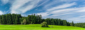 Green meadow and trees with sky
