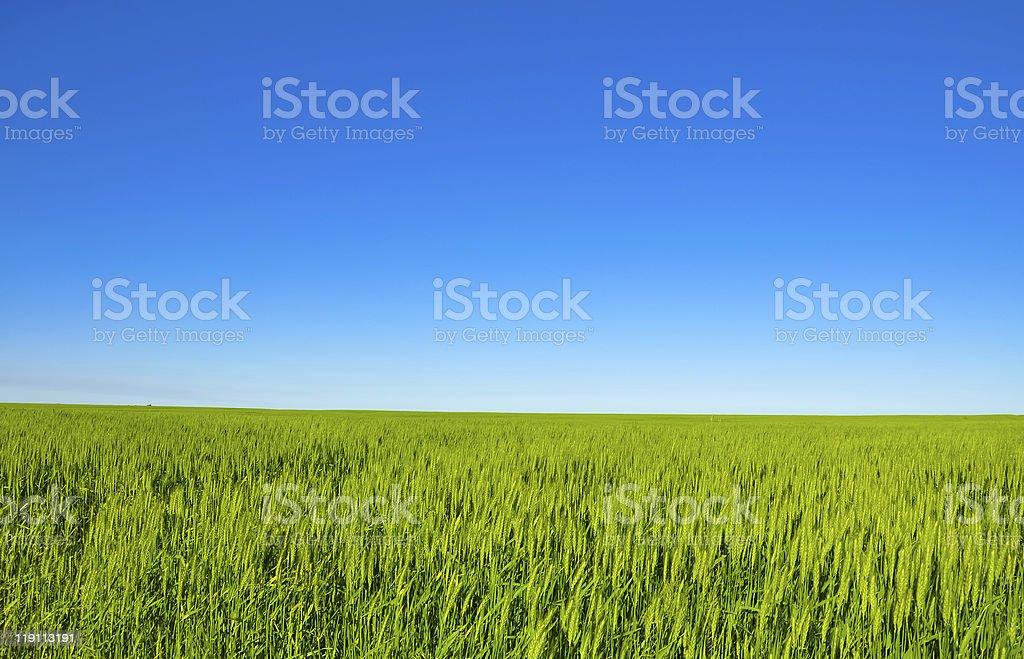 Green meadow extending through the far horizon stock photo