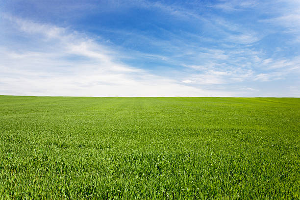 Green meadow field under a blue sky with clouds wheat meadow with beatiful sky horizon over land stock pictures, royalty-free photos & images