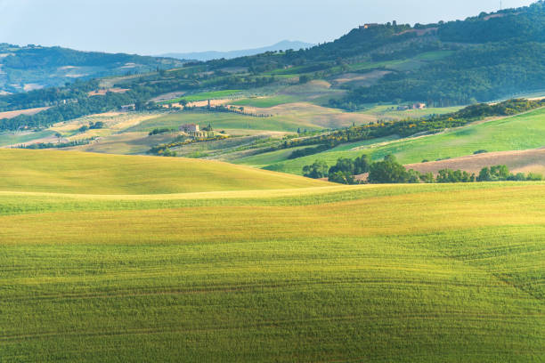 Green meadow grass field landscape view farms typical curved road with cypress at Crete Senesi in Toscana, Italia, Europe nature scenics background stock photo