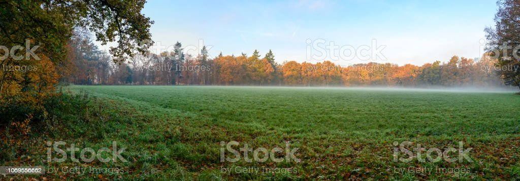 Green meadow in a  misty forest during a beautiful foggy autumn day - foto stock