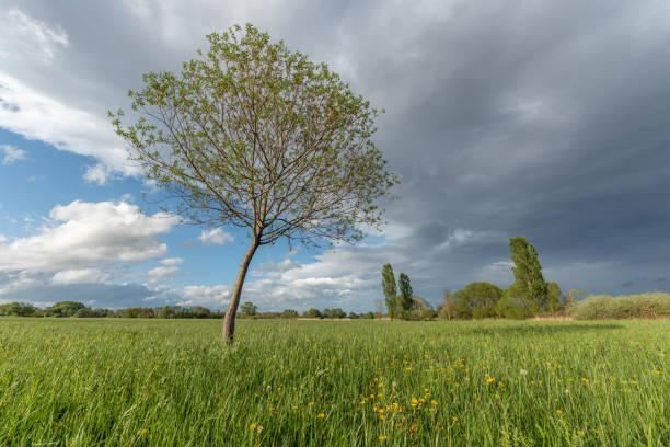 prairie verdoyante au printemps - orage en alsace photos et images de collection