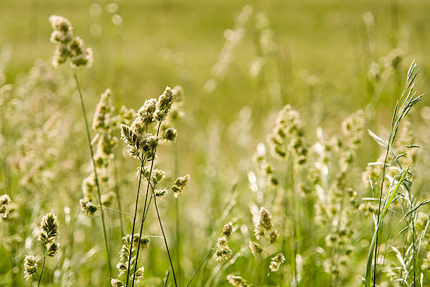 Green meadow in summer with pollen. stock photo