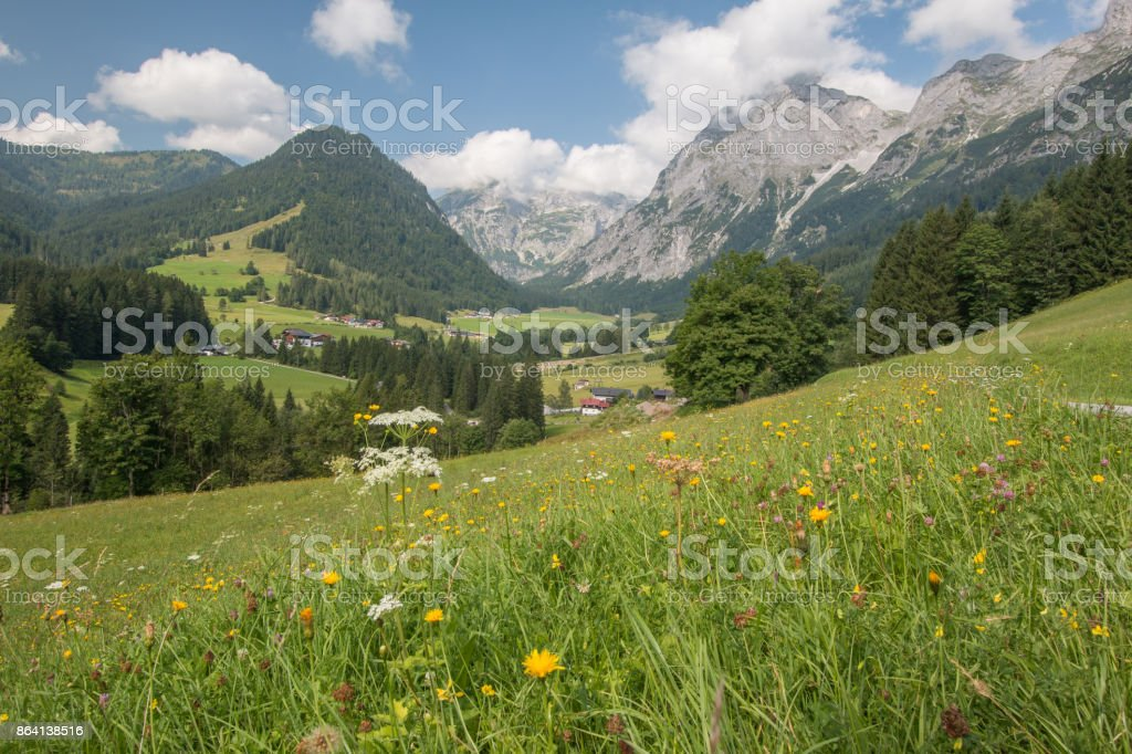 green meadow in the mountains royalty-free stock photo