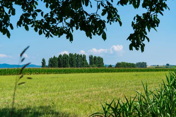 grön ängs landskap med träd. hunspach, frankrike - hunspach bildbanksfoton och bilder
