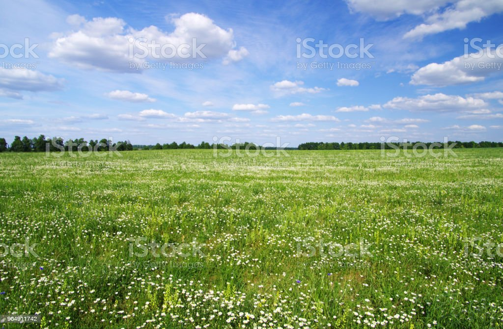 green meadow royalty-free stock photo