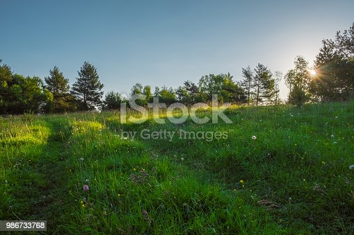 green meadow through which the sun shines with rays and blue sky, space for text, background image wallpaper