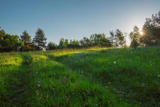 groene weide waardoor de zon met stralen en blauwe lucht, ruimte voor tekst schijnt - land stockfoto's en -beelden
