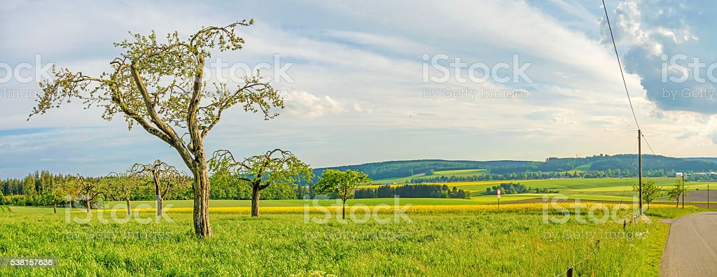 green meadow with fruit trees panorama - rural landscape stock photo