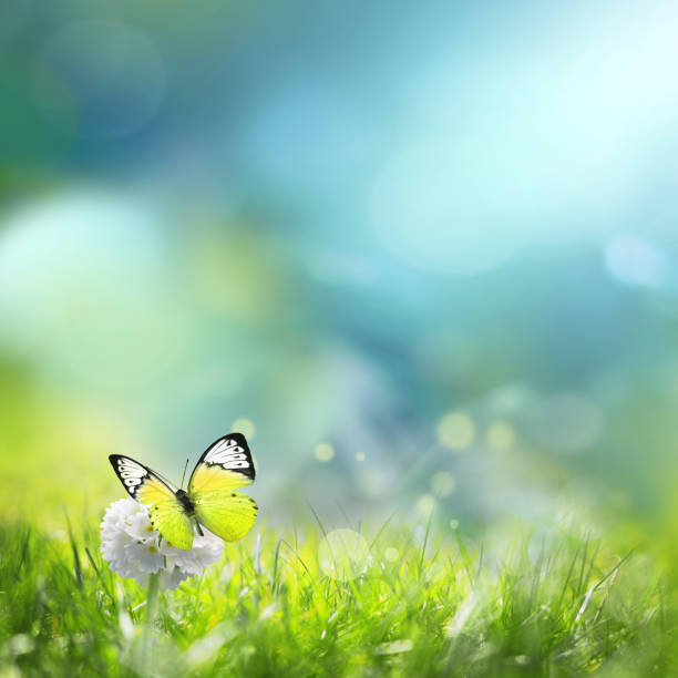 Green meadow with spherical white flower at dawn summer landscape picture id1199742702?b=1&k=6&m=1199742702&s=612x612&w=0&h=kqwsjbklk ixg5ibgctjec1yjyrxhdemzruaf4mffgi=