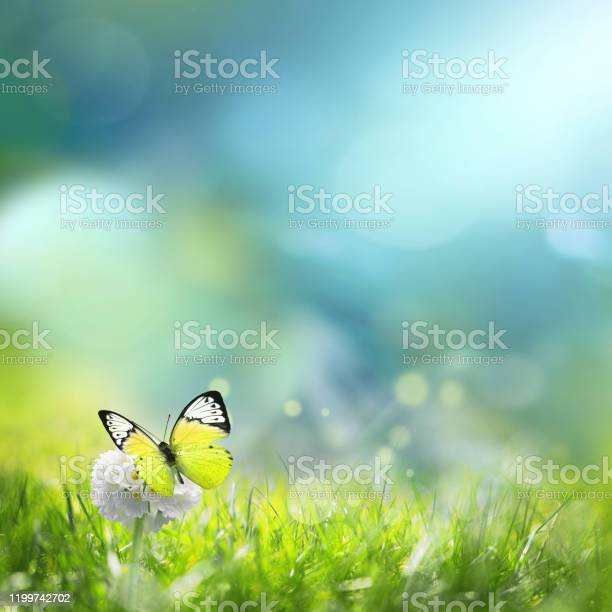 Photo of Green meadow with spherical white flower at dawn. Summer landscape