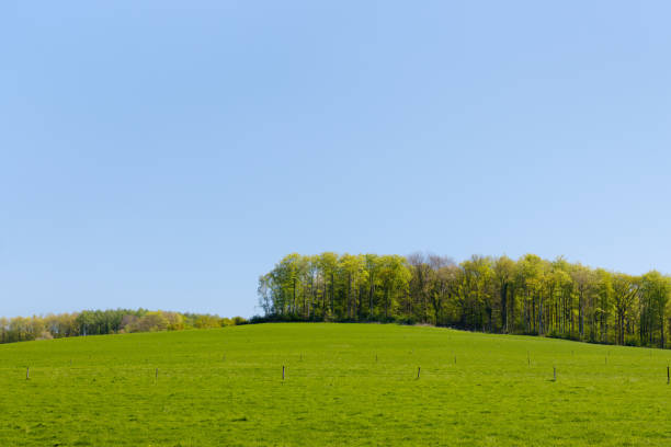 Green meadow with tree line (close version) stock photo