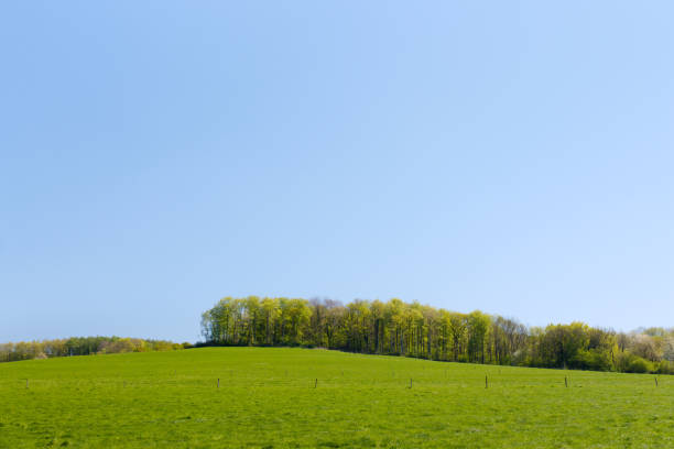 Green meadow with tree line stock photo