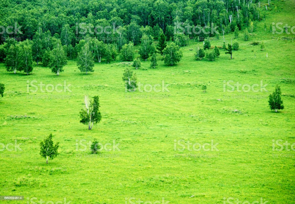 Green meadow with trees on a hill royalty-free stock photo