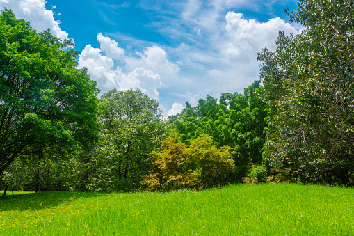 istock Green meadows and forests, large trees with bright skies and clouds. 1056791048
