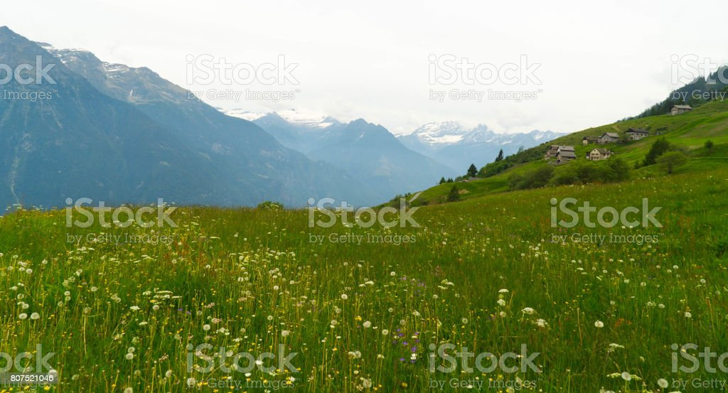 Green meadows and mountains in the Swiss valley. stock photo