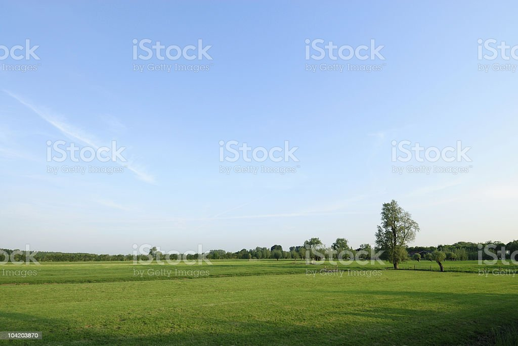 Green meadows with trees and baby blue skies stock photo