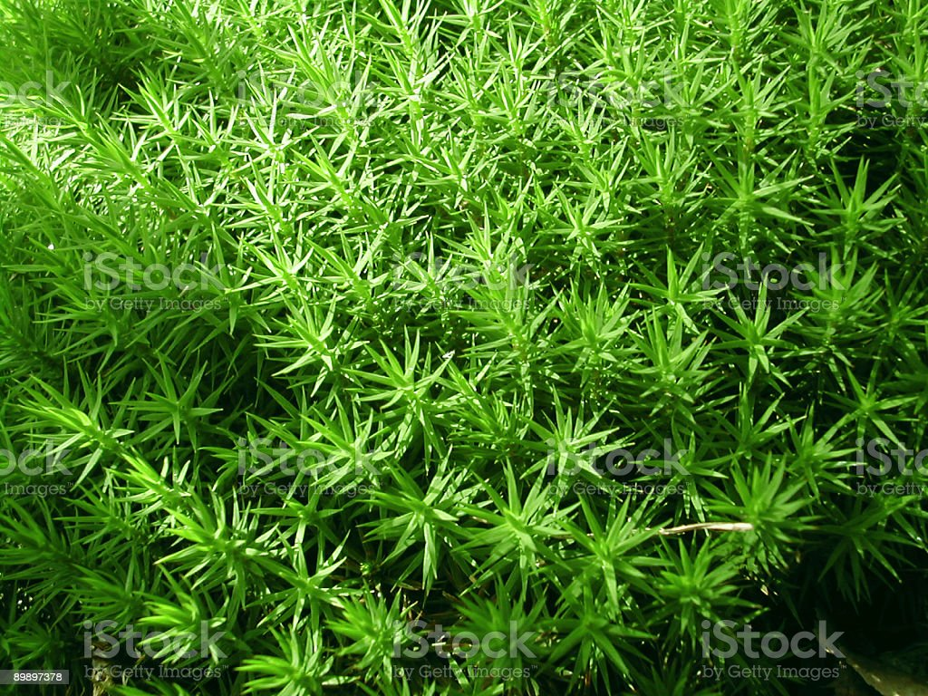 green microcosm closeup royalty-free stock photo