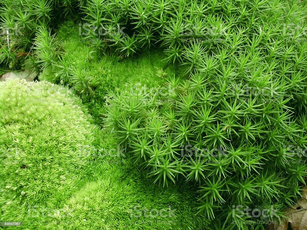 Verde microcosmos detalle foto de stock libre de derechos