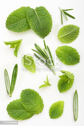 Green mint and rosemary leaves isolated on a white background.