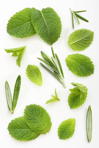 green mint and rosemary leaves - przybranie zdjęcia i obrazy z banku zdjęć