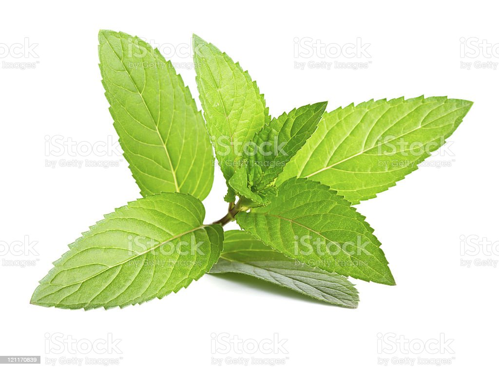 Green mint leaves on a white background royalty-free stock photo