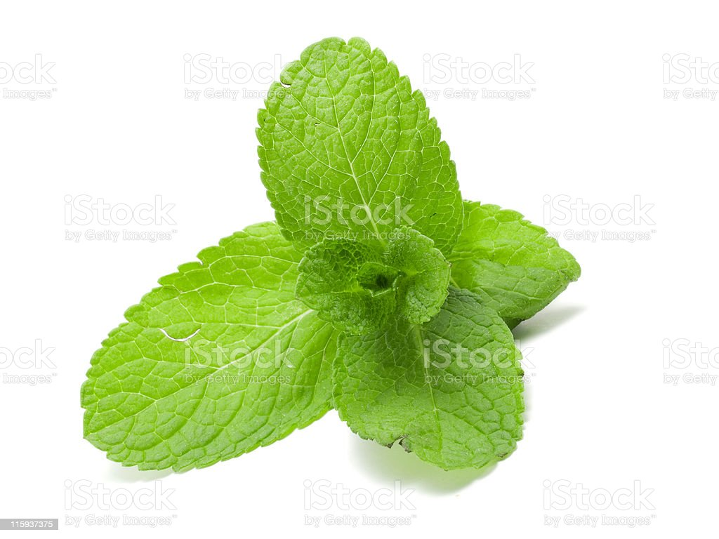 Green Mint royalty-free stock photo