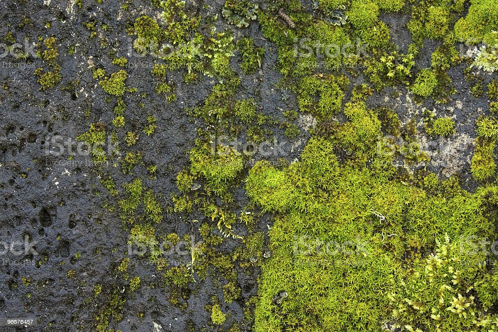 Green miss growing on a stone background stock photo