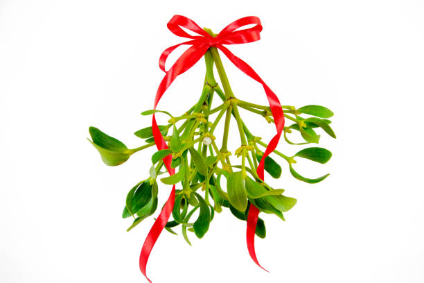 Green mistletoe with ribbon isolated on white background. Christmas concept stock photo