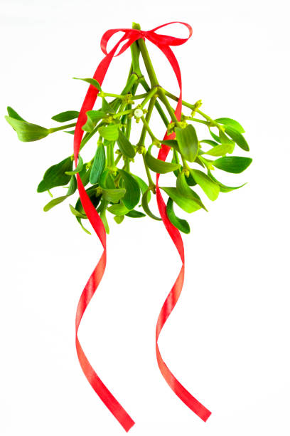 green mistletoe with ribbon isolated on white background. christmas concept - kiss стоковые фото и изображения