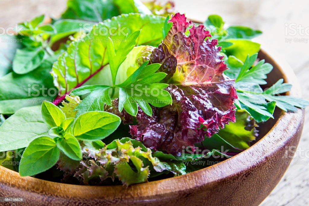 green mixed salad leaves stock photo