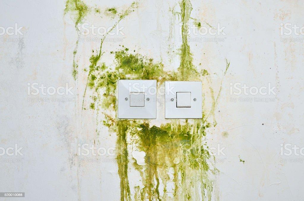 Grüner schimmel wand
