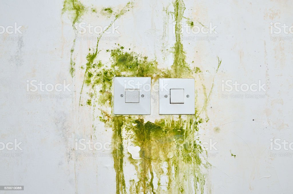 Green Mold on Wall with Switches stock photo
