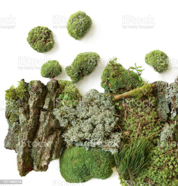 Photo of Green moss and elements of forest vegetation isolated on white  background.