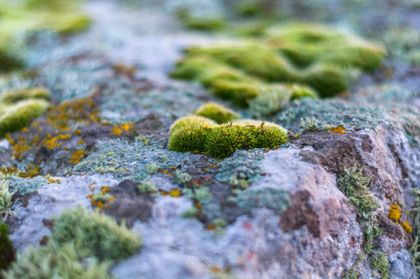 green moss and lichen on granite stones - granite rock stock photos and pictures
