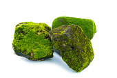 istock Green moss and stone isolated on white background 827661892