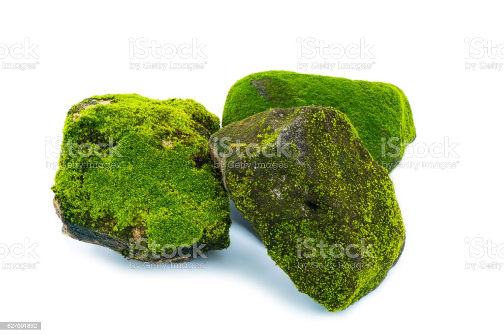 Green moss and stone isolated on white background stock photo